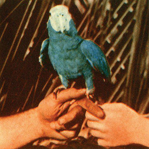 BirdAreYouSerious